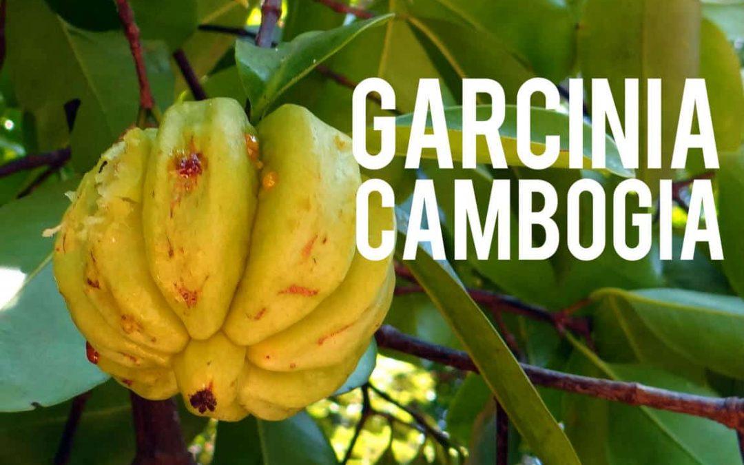 Garcinia Cambogia, le fruit de toutes les promesses minceur