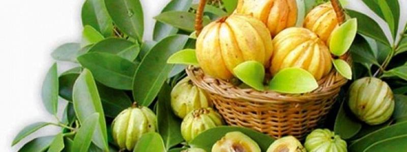 garcinia-cambogia-ingredient-principal-de-garcinia-pure