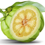 fruit-garcinia-cambogia-burnet-HT