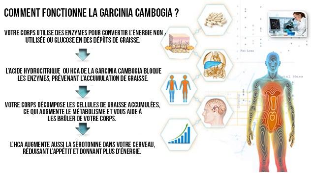 fonctionnement-garcinia-cambogia-calcium-potassium