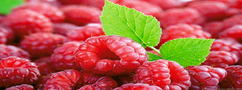 framboises-ingredient-de-raspberry-ketone-max