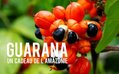 Guarana Blog