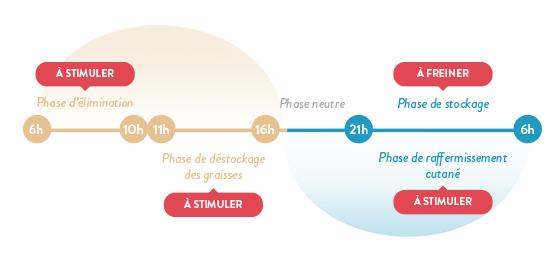 phases-de-chronobiologie-principe-de-base-de-minceur-24-forte-de-forte-pharma