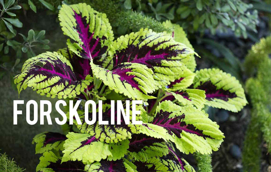 Forkoline Blog