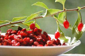 baies-de-goji-ingredient-de-Goji-Berry-Extract-500mg