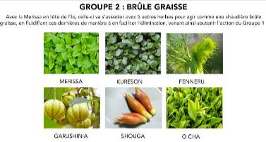 ingredient-herbaxyll-les-plantes-brule-graisse