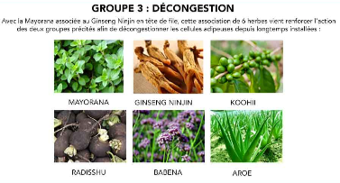 ingredient-herbaxyll-les-plantes-decongestion