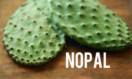 Nopal, une plante aux propriétés curatives