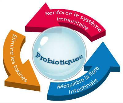 Bienfaits des probiotiques