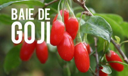 Baie de Goji, le fruit aux mille vertus