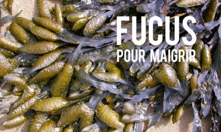 Fucus pour maigrir, l'alternative naturelle