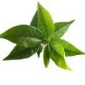 xanthadrene-the-vert-testeurpilules.com