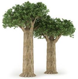 baobab-arbre