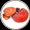 reishi-champignon