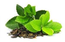 The vert feuilles