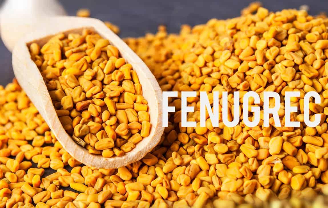Fenugrec Blog