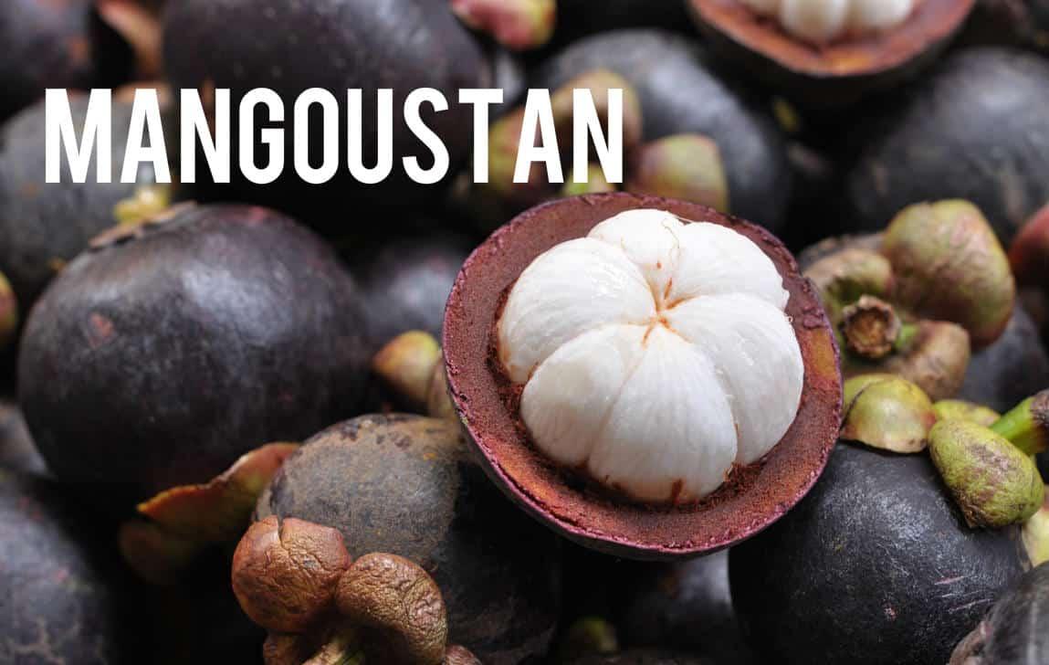 Mangoustan Blog