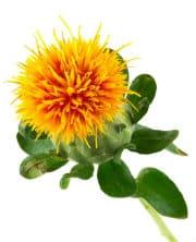 Carthame fleur