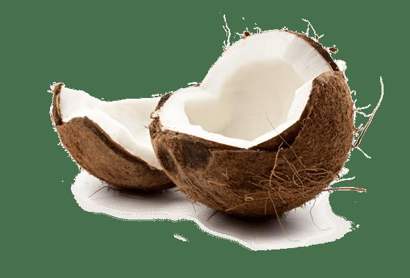 Noix de coco fruit