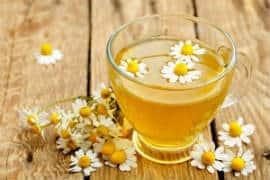 Tisane de fleurs de camomille