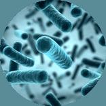Bacteries Probiotiques