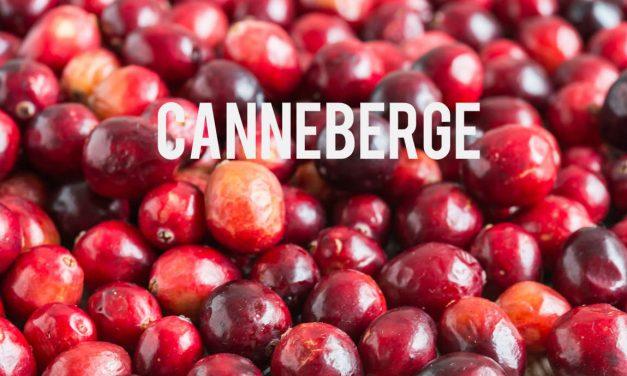 Canneberge, un fruit aux vertus minceur qui vient du Canada